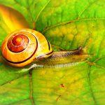 Snail Farm – atsiliepimai, testas, ar tai veikia, forumas