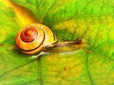 Snail Farm kaina